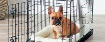 elementos para tus perros