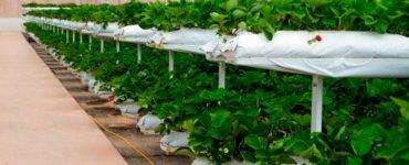 productos agrícolas especializados